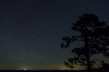 Shooting star over towering pine tree