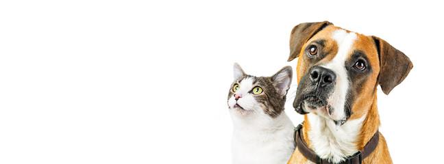 Pies i kot razem na biały transparent poziomy