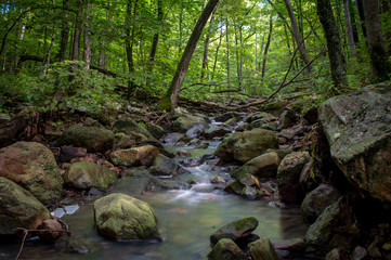 Smooth Forest Creek  - Wide
