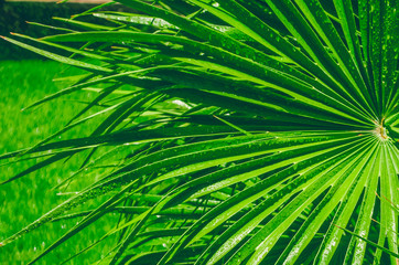 Tropical leaves. On the palm leaves a drop of water