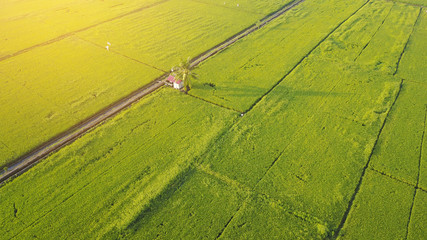 Arial view of paddy field.