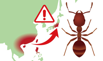 fire ants invasion of japan.