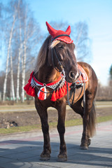 A horse in red clothes