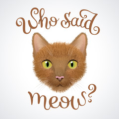 Muzzle of red cat with question: Who said meow?