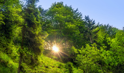 ein Sonnenaufgang im Wald