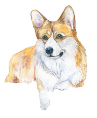 Dog watercolor. Watercolor close up portrait of a short-legged Welsh Corgi. Isolated on white background. Hand drawn cute pet. Greeting card design, veterinary clinics, dog shows, logos