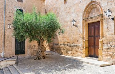 Olivenbaum Mediterran Dorf Alt