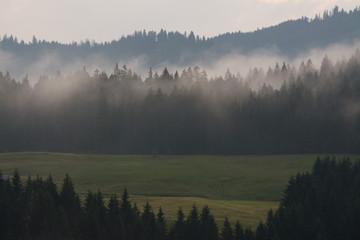Poster Morning with fog nebelschwaden im gebirge
