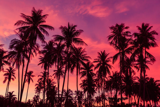 Silhouette of coconut trees against dramatic red sunset sky background.