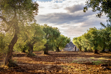 Fotobehang Olijfboom Trulli with olive grove. Val d'Itria - Puglia (Apulia) - Italy
