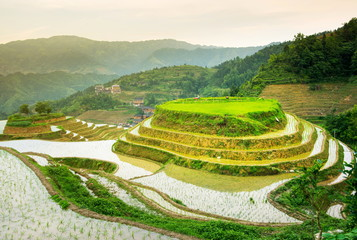 Garden Poster Rice fields Terraced rice field in Longji, Guilin area, China