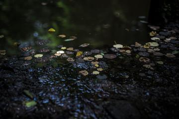 水に浮かぶ枯れ葉