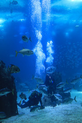 Fish swimming in a reef with blue ocean water