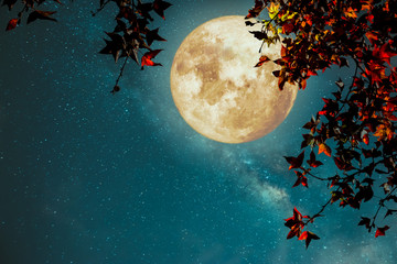 Wall Mural - Beautiful autumn fantasy - maple tree in fall season and full moon with milky way star in night skies background. Retro style artwork with vintage color tone