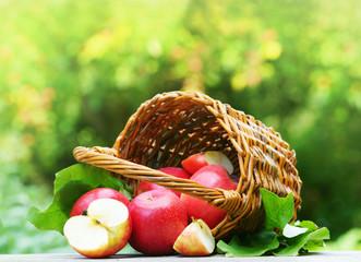 "Apples, Äpfel, Apfel, ""Pink Lady"", ""Cripps Pink"", Äpfel mit Korb, Apfelernte, Apfelbaum, Textraum, copy space"