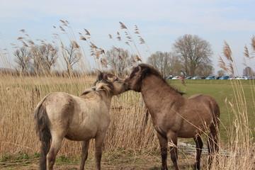 Photo on textile frame Horses Horses
