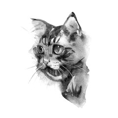 Cute cat. Watercolor illustration. T-shirt print. Greeting card. Poster Kitten.