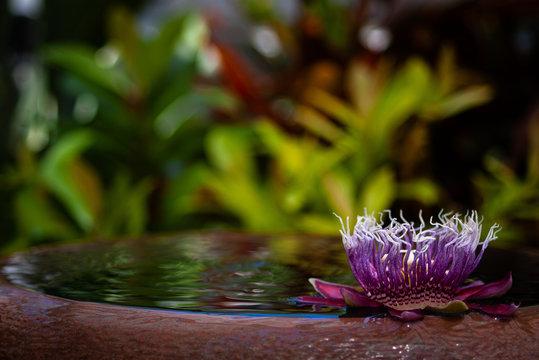 Passion Flower. Purple floating