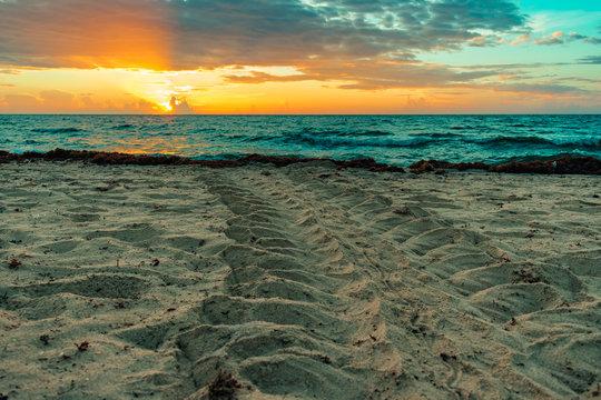 loggerhead sea turtle tracks in the sand at sunrise
