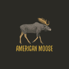 american moose or eurasian elk engraved hand drawn in old sketch style, vintage animals. logo or emblems, retro label and badge.