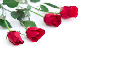 red rose with leaves isolated on white background for valentine background or romantic event.(selective focus)