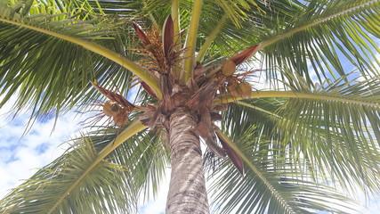 Palme am Strand der Dominikanischen Republik