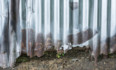 Damaged fence from corrugated iron in city street. Background from old rusty wall from wavy metal sheet in silvery color with brown stains. Abstract striped uneven texture.