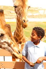 Young boy feeding giraffes at the zoo.