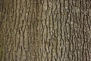tree Fototapete