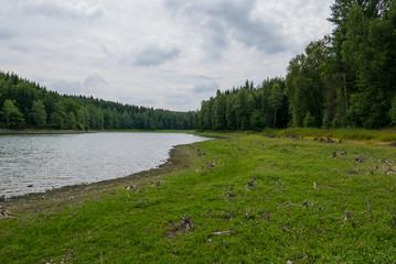 Harzer Wald im Sommer