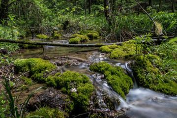 Idyllischer Wildbach in einem Mittelgebirge