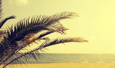 Palm tree on summer beach