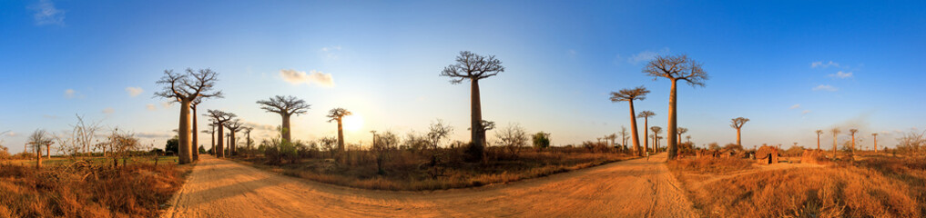 Beautiful 360 degree panorama at sunset at the avenue of the baobabs in Madagascar