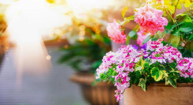 Beautiful patio flower pots on balcony in sunlight