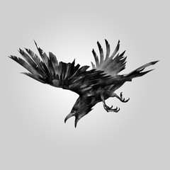 drawn attacking bird raven
