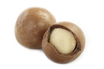 Macadamia nut isolated