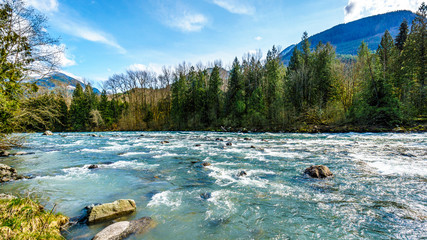 The fast flowing crystal clear waters of the Chilliwack River during early spring run off near the town of Chilliwack in British Columbia, Canada Wall mural