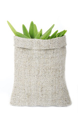 green onion in sack isolated
