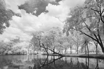 Infrared photography (Black and white), Vachirabenjatas Park, land mark of Bangkok, Thailand.