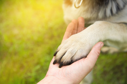 a man holds the paw of the dog in the Park in the summer at sunset. the concept of friendship, teamwork, love
