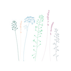 Meadow grasses, herbs and flowers silhouettes.
