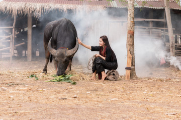 The lives of women with buffalo in the countryside,Asian girl wearing traditional Thai dress at farmland.
