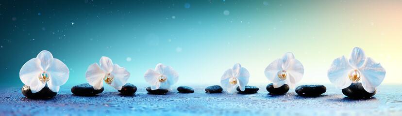 Orchidee W Rzędzie Na Zdrojach Kamieni W Świeżym Tle