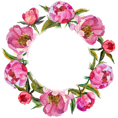 Wildflower peony flower frame in a watercolor style. Full name of the plant: peony. Aquarelle wild flower for background, texture, wrapper pattern, frame or border.
