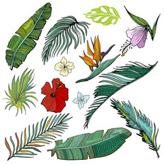 Hand Drawn Vector Tropical Set. Banana And Palm Leaves And Tropical Flowers.