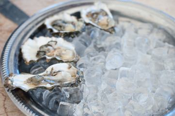 Fresh oysters lie on an ice tray