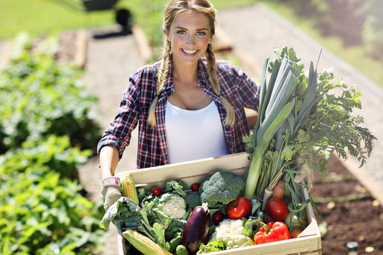 Pretty woman with box of vegetables in her garden