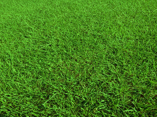 Obraz trawa, golf - fototapety do salonu
