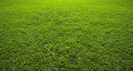 Poster Artist KB Background of beautiful green grass pattern
