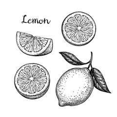 Hand drawn lemon set